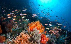 Фото - Як утворюються і де мешкають корали?